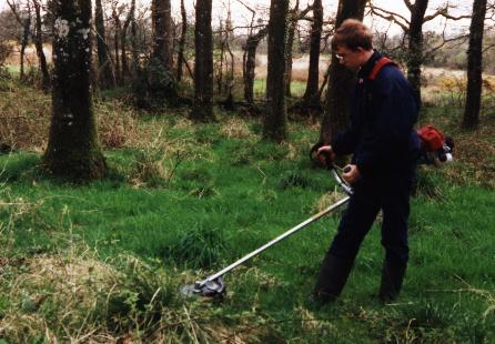 Brush cutting the brambles